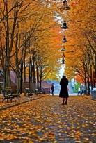 a,autumn in ny