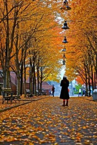 a,autumn in ny