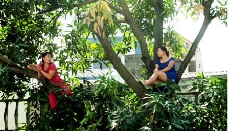 Hai phụ nữ cố thủ trên cây để phản đối chặt cây.
