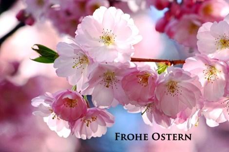 Ein-schoenes-Osterfest-a20686183